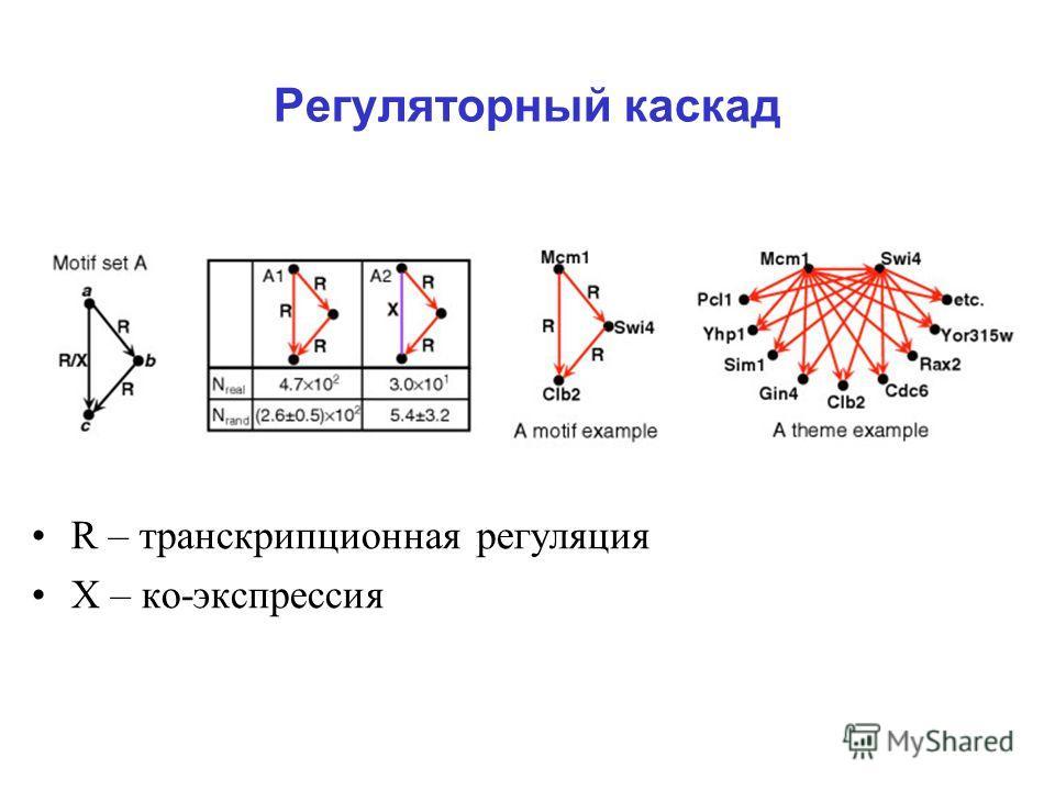 Регуляторный каскад R – транскрипционная регуляция Х – ко-экспрессия