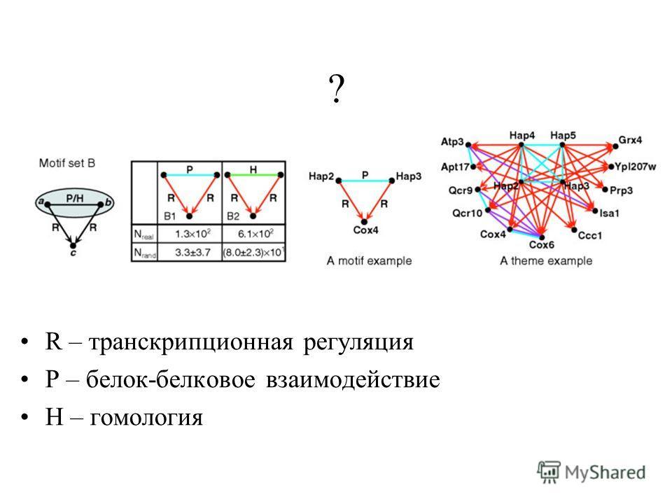 R – транскрипционная регуляция Р – белок-белковое взаимодействие Н – гомология ?