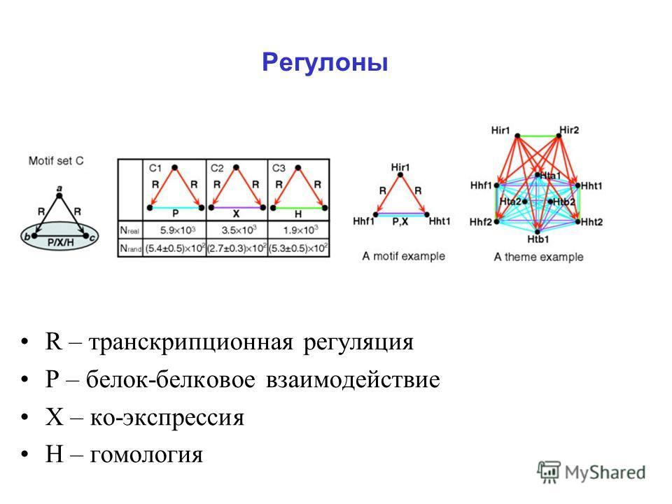 Регулоны R – транскрипционная регуляция Р – белок-белковое взаимодействие Х – ко-экспрессия Н – гомология