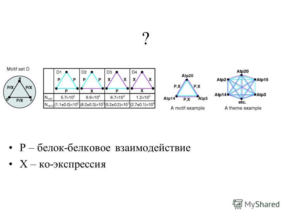Р – белок-белковое взаимодействие Х – ко-экспрессия ?