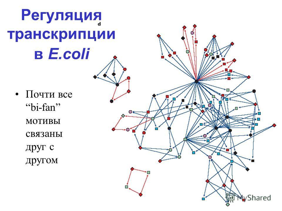 Почти все bi-fan мотивы связаны друг с другом Регуляция транскрипции в E.coli