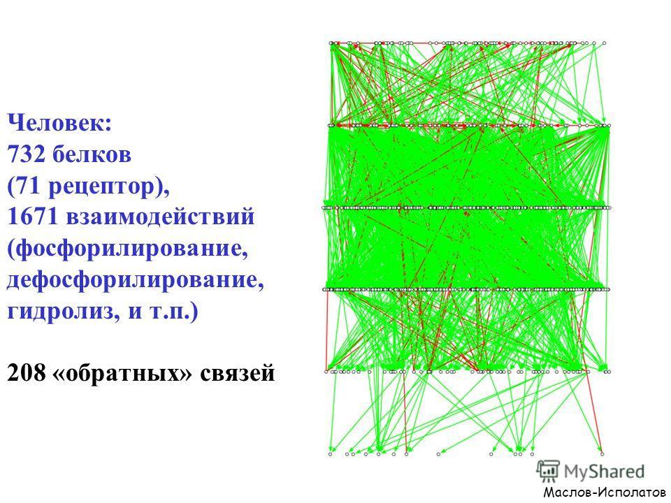 Человек: 732 белков (71 рецептор), 1671 взаимодействий (фосфорилирование, дефосфорилирование, гидролиз, и т.п.) 208 «обратных» связей Маслов-Исполатов