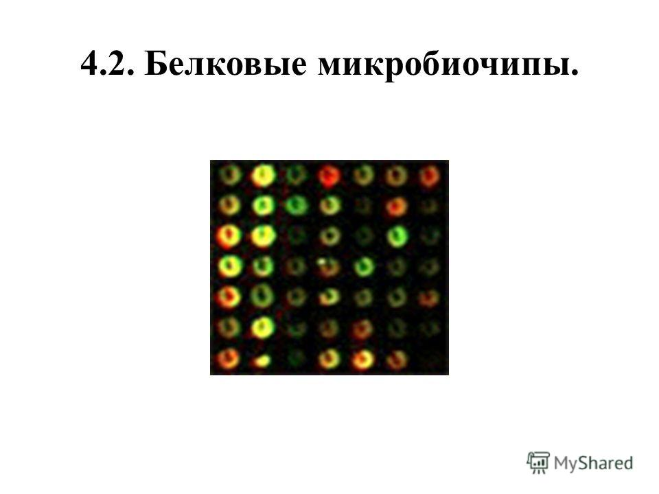 4.2. Белковые микробиочипы.