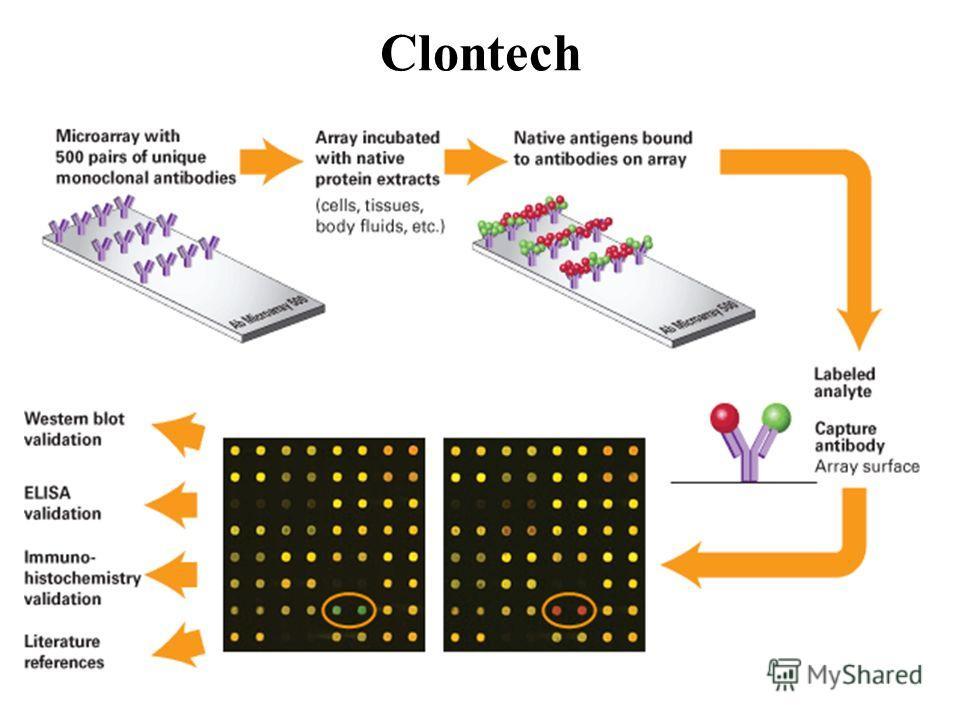 Clontech