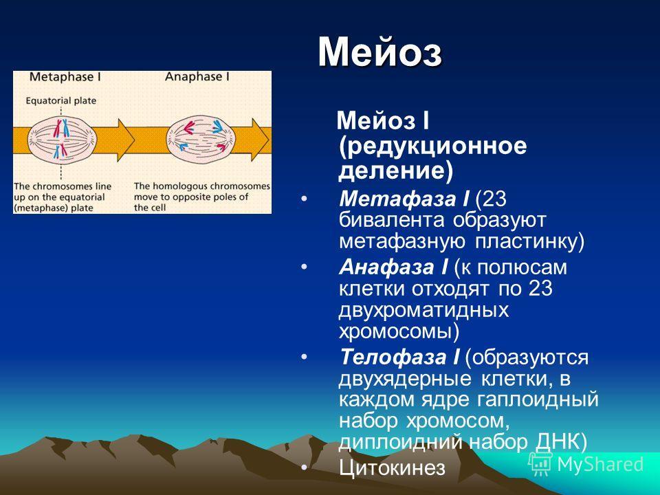 Кроссинговер взаимный обмен участками между гомологическими хромосомами происходит в пахитене профазы I