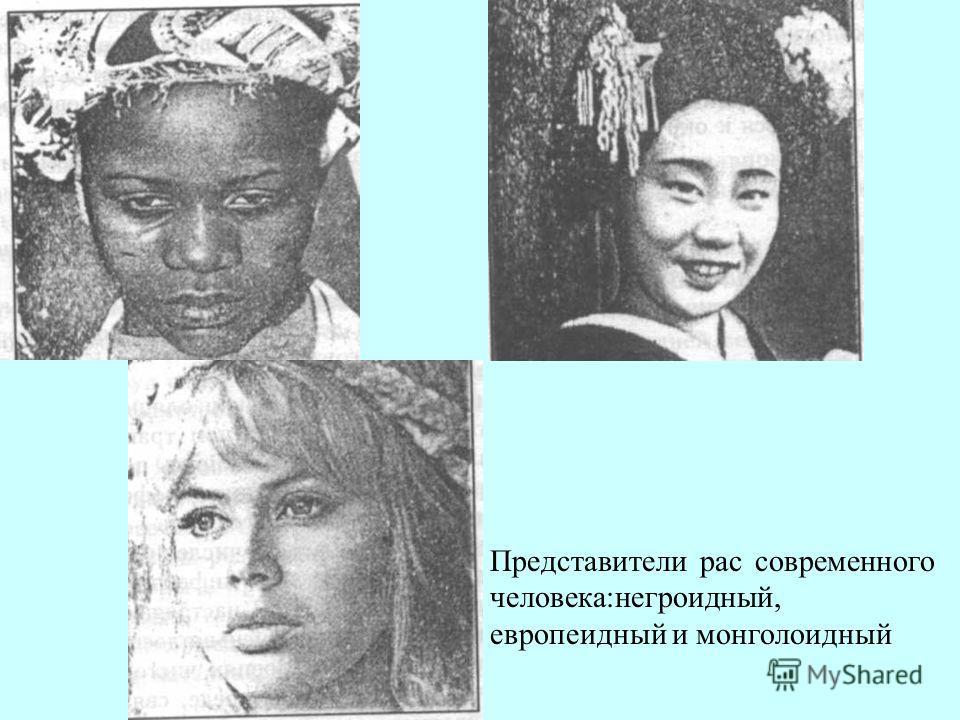 Представители рас современного человека:негроидный, европеоидный и монголоидный