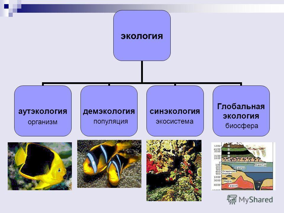 экология аутэкологиядемэкологиясинэкология Глобальная экология организм популяция экосистема биосфера
