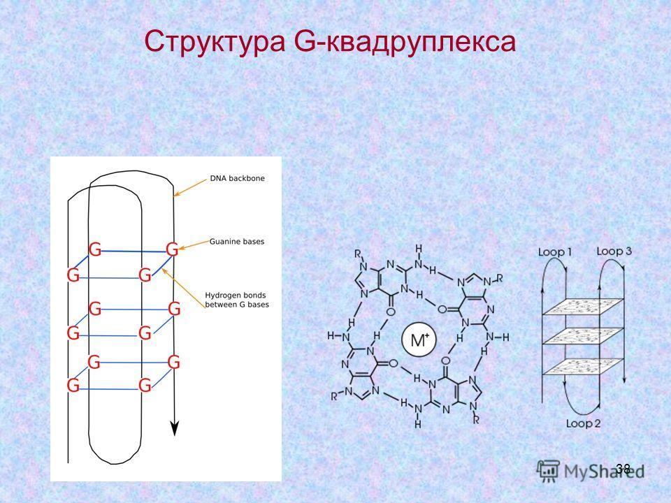 38 Структура G-квадруплекса