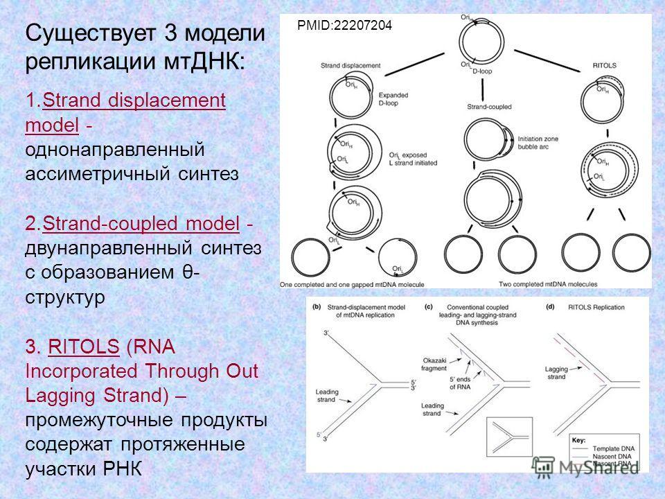 45 Существует 3 модели репликации мтДНК: 1. Strand displacement model - однонаправленный ассиметричный синтез 2.Strand-coupled model - двунаправленный синтез с образованием θ- cтруктур 3. RITOLS (RNA Incorporated Through Out Lagging Strand) – промежу