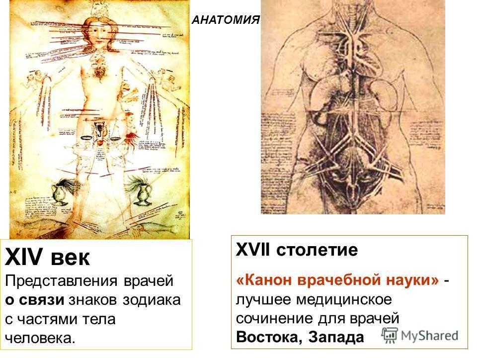 XIV век Представления врачей о связи знаков зодиака с частями тела человека. XVII столетие «Канон врачебной науки» - лучшее медицинское сочинение для врачей Востока, Запада АНАТОМИЯ