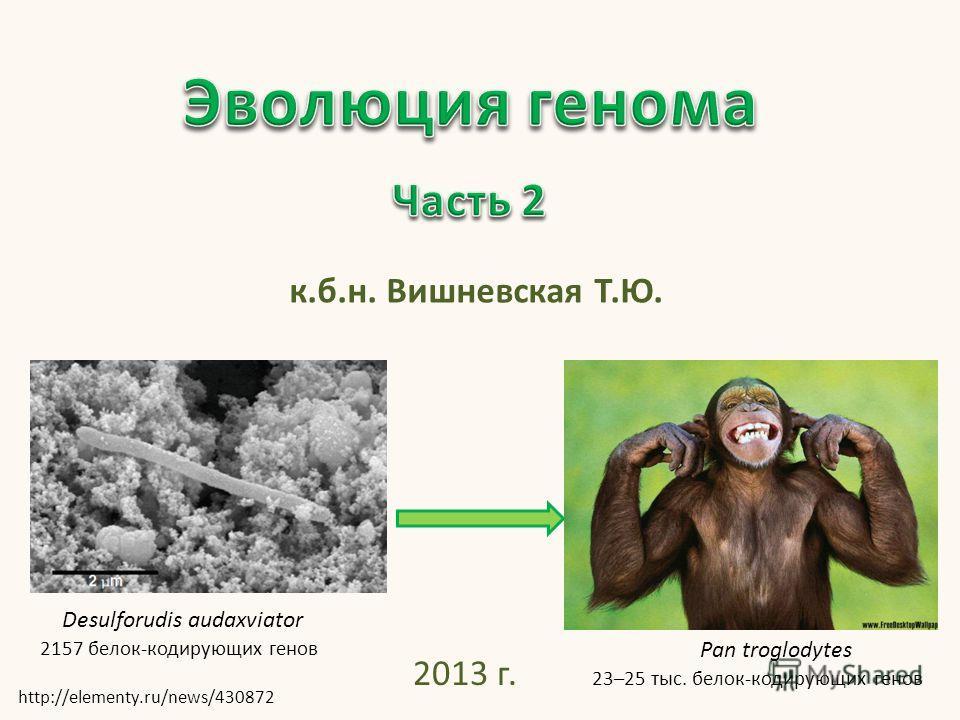 к.б.н. Вишневская Т.Ю. 2013 г. Desulforudis audaxviator 2157 белок-кодирующих генов http://elementy.ru/news/430872 Pan troglodytes 23–25 тыс. белок-кодирующих генов