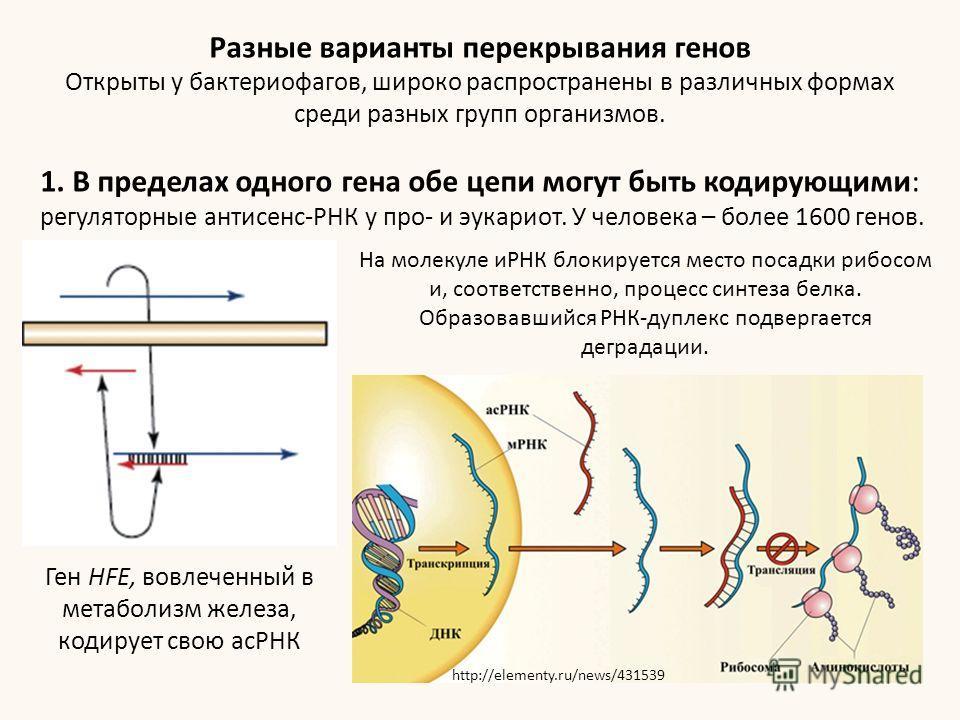 Разные варианты перекрывания генов Открыты у бактериофагов, широко распространены в различных формах среди разных групп организмов. 1. В пределах одного гена обе цепи могут быть кодирующими: регуляторные антисенс-РНК у про- и эукариот. У человека – б