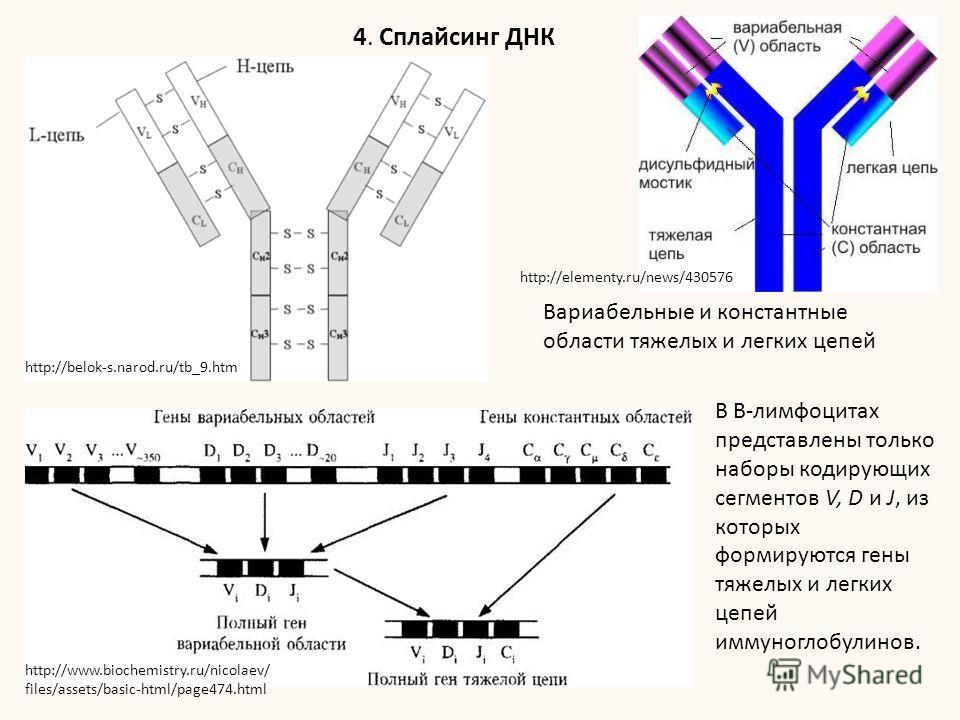 В В-лимфоцитах представлены только наборы кодирующих сегментов V, D и J, из которых формируются гены тяжелых и легких цепей иммуноглобулинов. Вариабельные и константные области тяжелых и легких цепей 4. Сплайсинг ДНК http://belok-s.narod.ru/tb_9. htm