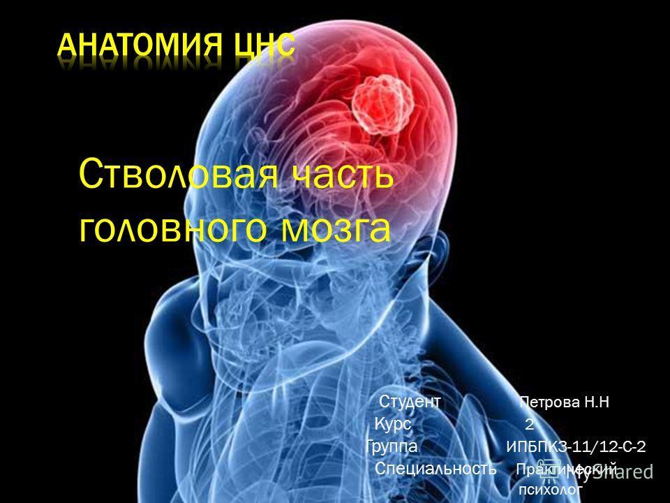 Стволовая часть головного мозга Студент Петрова Н.Н Курс 2 Группа ИПБПКЗ-11/12-С-2 Специальность Практический психолог