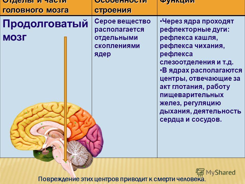 Отделы и части головного мозга Особенности строения Функции Продолговатый мозг Серое вещество располагается отдельными скоплениями ядер Через ядра проходят рефлекторные дуги: рефлекса кашля, рефлекса чихания, рефлекса слезоотделения и т.д. В ядрах ра