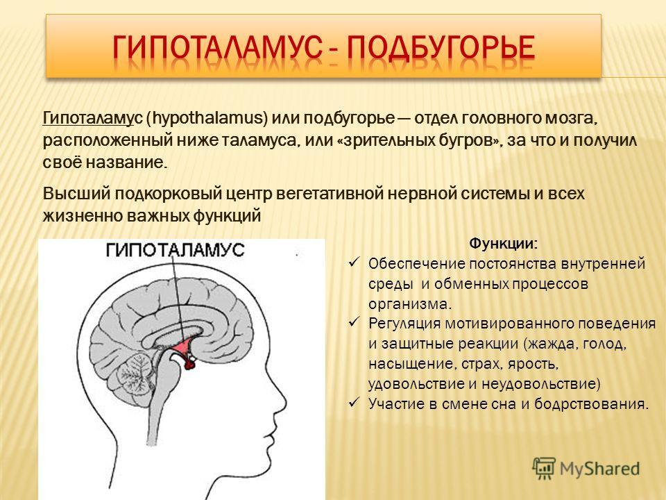 Гипоталамус (hypothalamus) или подбугорье отдел головного мозга, расположенный ниже таламуса, или «зрительных бугров», за что и получил своё название. Высший подкорковый центр вегетативной нервной системы и всех жизненно важных функций Функции: Обесп