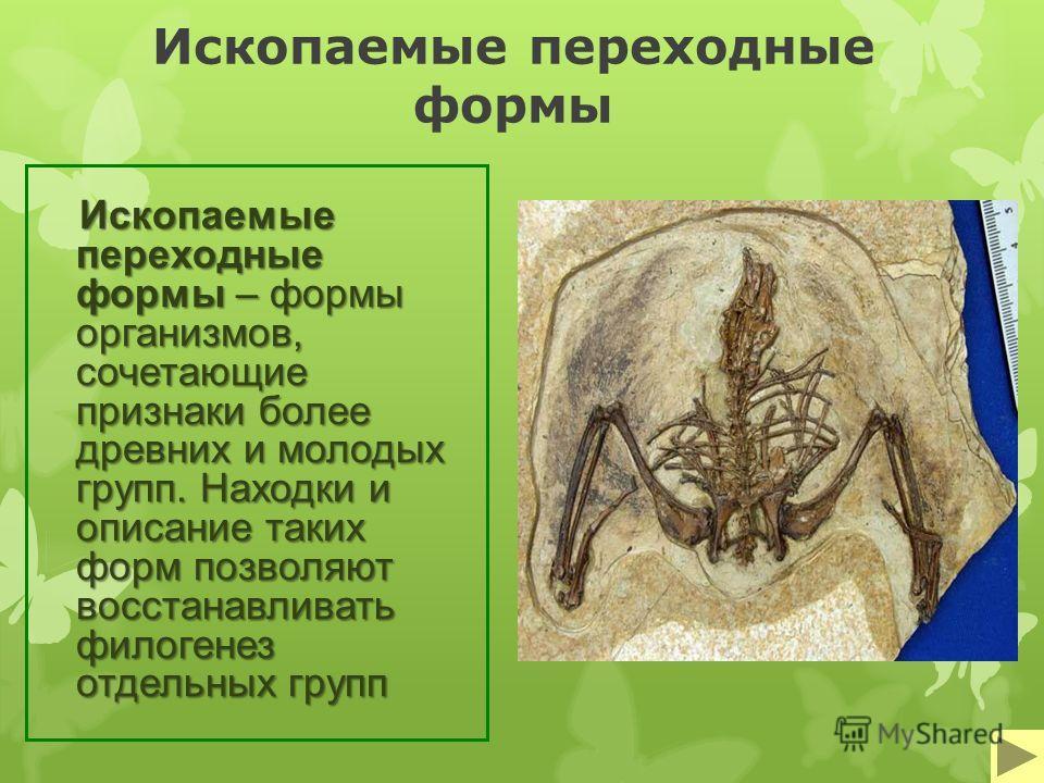 Ископаемые переходные формы Ископаемые переходные формы – формы организмов, сочетающие признаки более древних и молодых групп. Находки и описание таких форм позволяют восстанавливать филогенез отдельных групп
