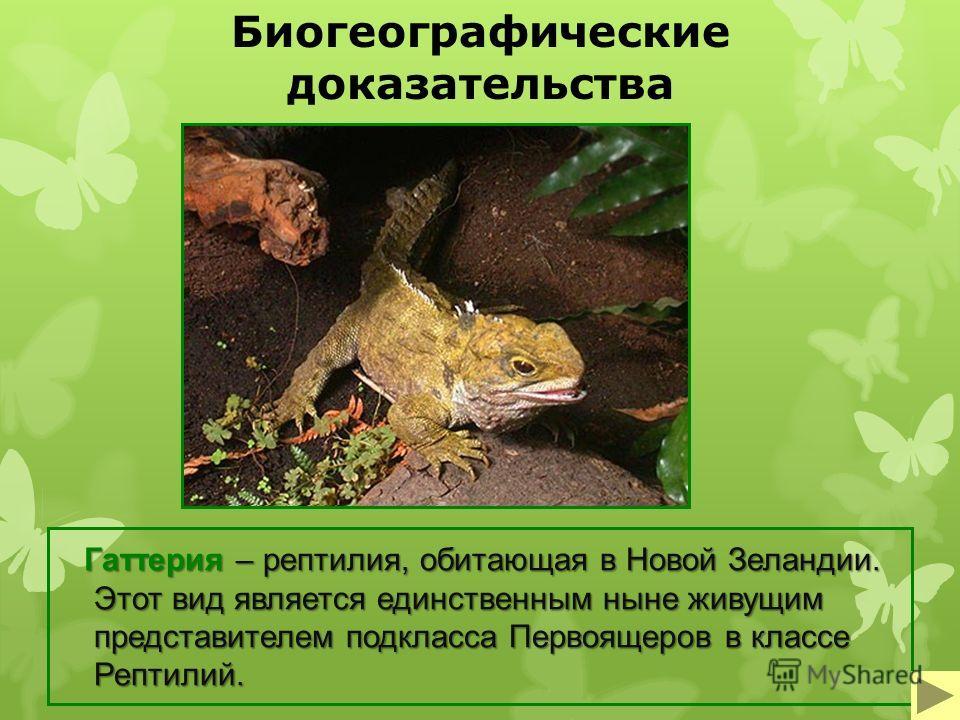Биогеографические доказательства Гаттерия – рептилия, обитающая в Новой Зеландии. Этот вид является единственным ныне живущим представителем подкласса Первоящеров в классе Рептилий. Гаттерия – рептилия, обитающая в Новой Зеландии. Этот вид является е