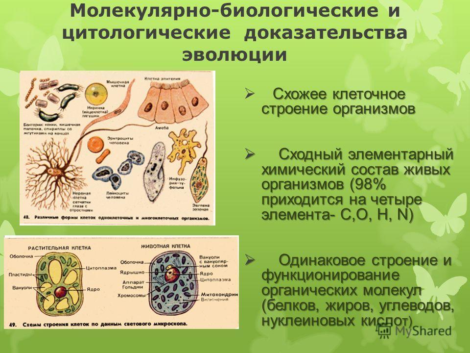 Молекулярно-биологические и цитологические доказательства эволюции Схожее клеточное строение организмов Сходный элементарный химический состав живых организмов (98% приходится на четыре элемента- С,О, H, N) Сходный элементарный химический состав живы