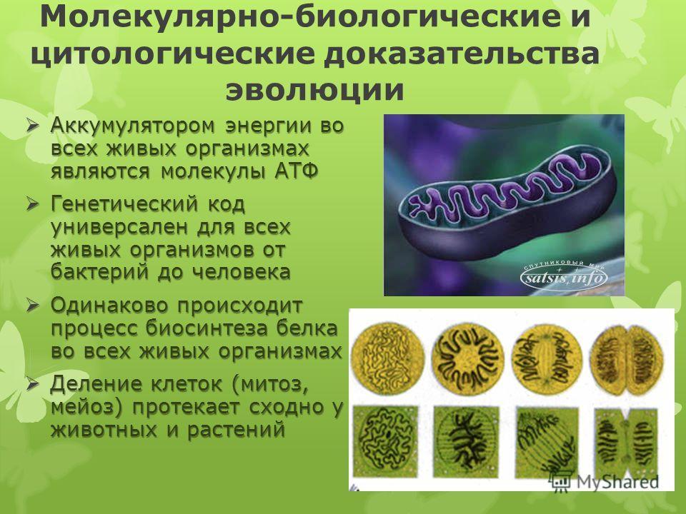 Молекулярно-биологические и цитологические доказательства эволюции Аккумулятором энергии во всех живых организмах являются молекулы АТФ Аккумулятором энергии во всех живых организмах являются молекулы АТФ Генетический код универсален для всех живых о