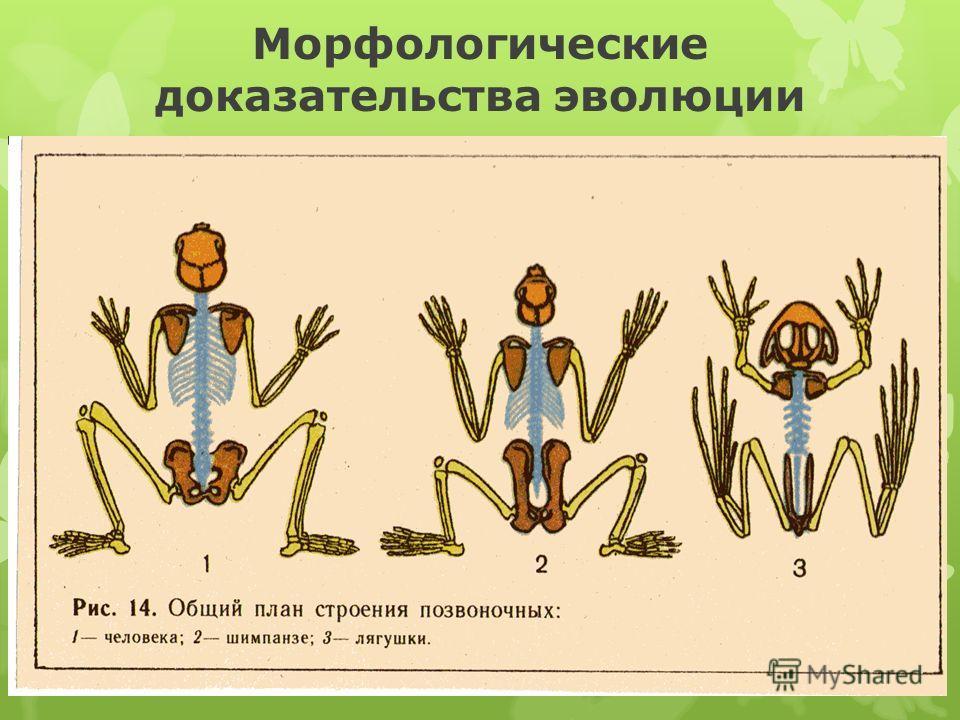 Морфологические доказательства эволюции