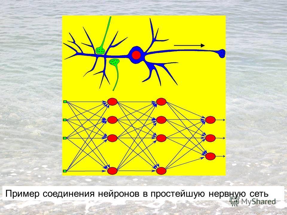 Пример соединения нейронов в простейшую нервную сеть