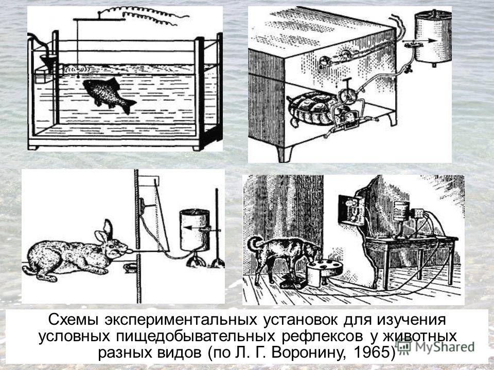 Схемы экспериментальных установок для изучения условных пищедобывательных рефлексов у животных разных видов (по Л. Г. Воронину, 1965)