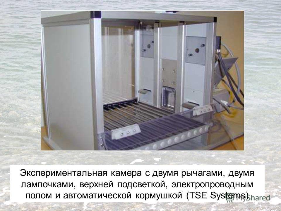 Экспериментальная камера с двумя рычагами, двумя лампочками, верхней подсветкой, электропроводным полом и автоматической кормушкой (TSE Systems)