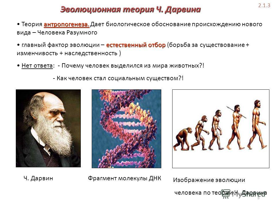 darwins evolutionary theory