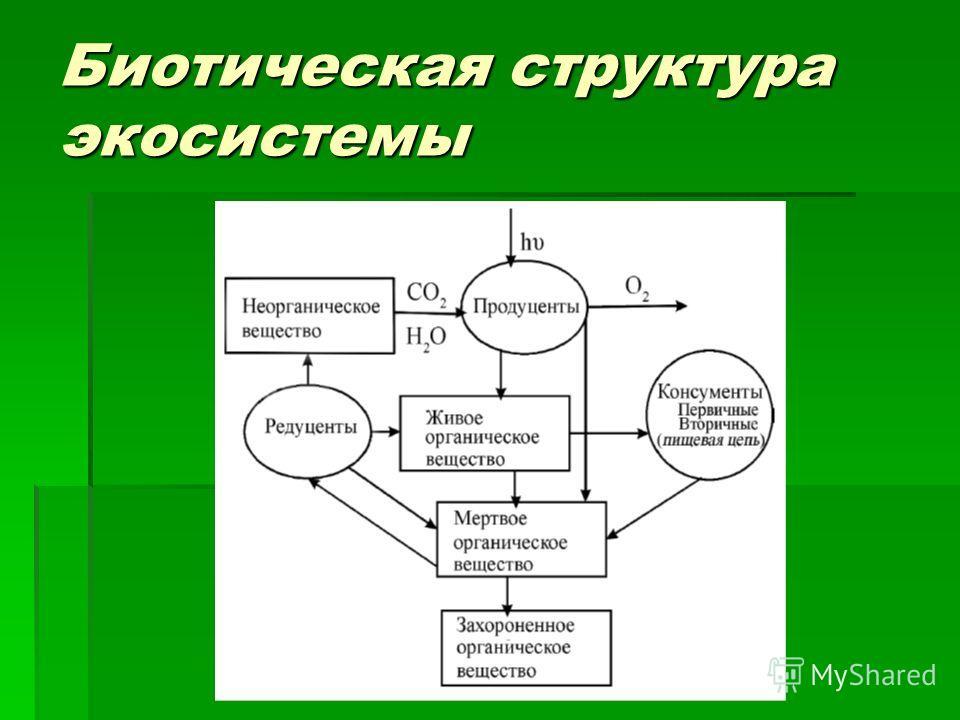Биотическая структура экосистемы
