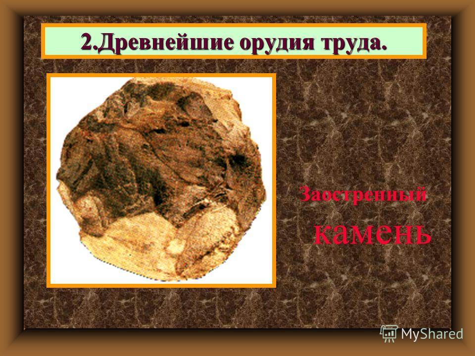 2. Древнейшие орудия труда. Заостренный камень