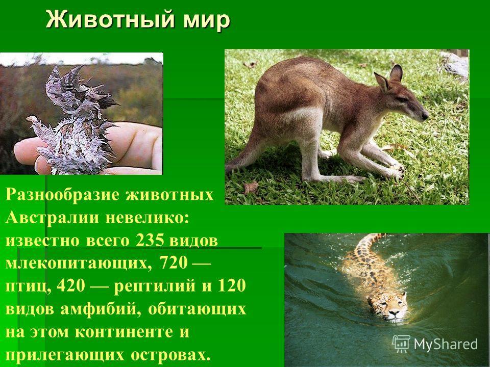 Разнообразие животных Австралии невелико: известно всего 235 видов млекопитающих, 720 птиц, 420 рептилий и 120 видов амфибий, обитающих на этом континенте и прилегающих островах. Животный мир