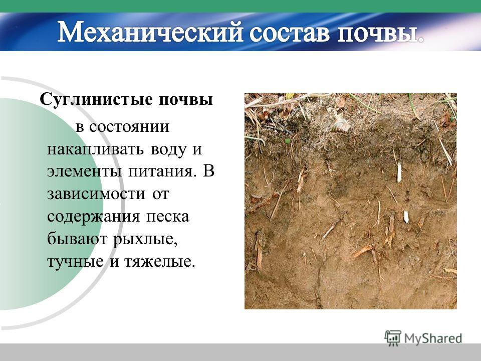 Суглинистые почвы в состоянии накапливать воду и элементы питания. В зависимости от содержания песка бывают рыхлые, тучные и тяжелые.