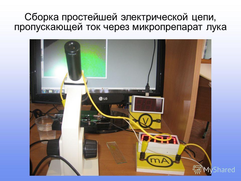 Сборка простейшей электрической цепи, пропускающей ток через микропрепарат лука