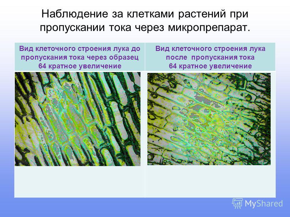 Наблюдение за клетками растений при пропускании тока через микропрепарат. Вид клеточного строения лука до пропускания тока через образец 64 кратное увеличение Вид клеточного строения лука после пропускания тока 64 кратное увеличение