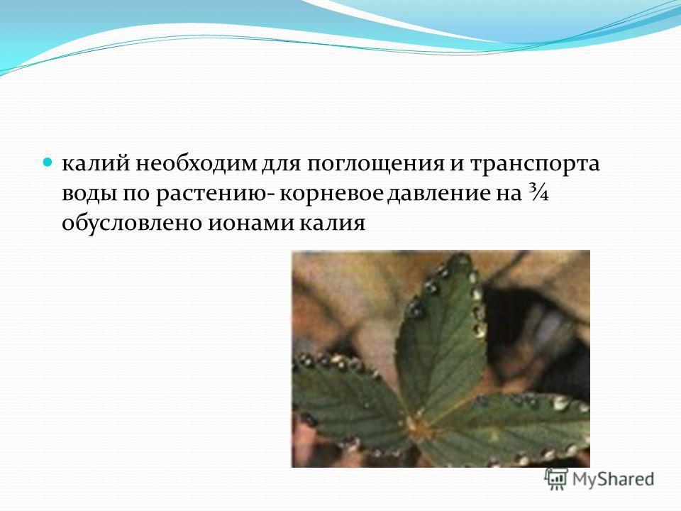 калий необходим для поглощения и транспорта воды по растению- корневое давление на ¾ обусловлено ионами калия