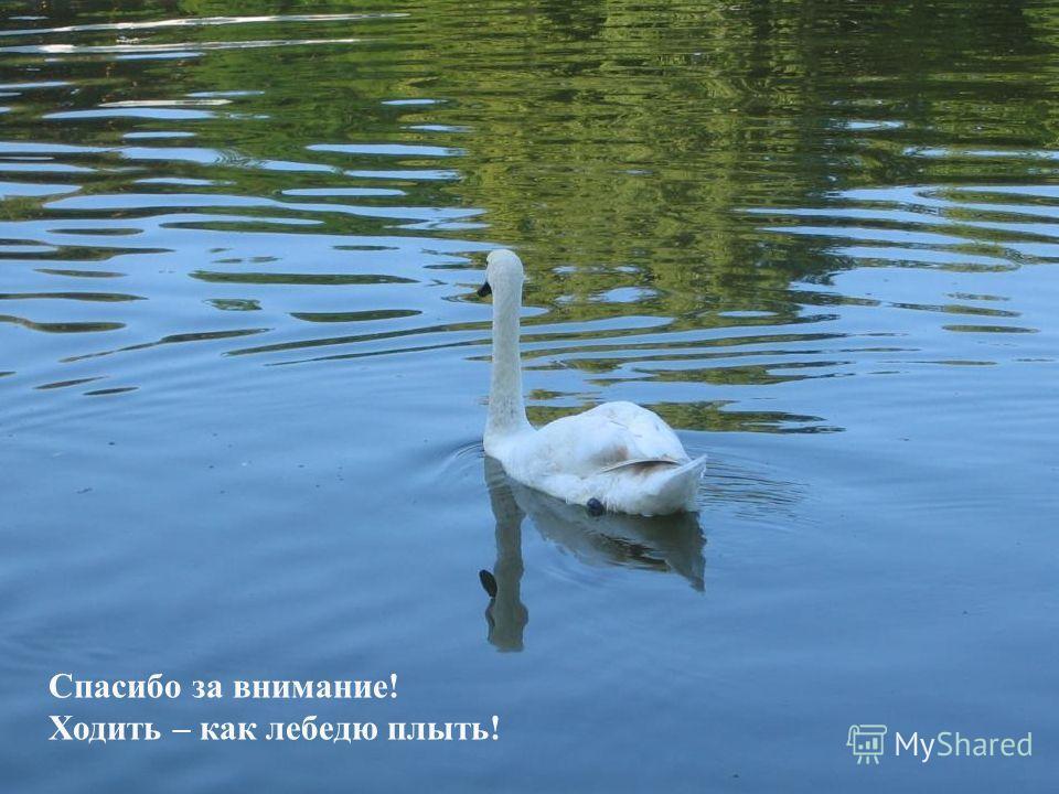 Спасибо за внимание! Ходить – как лебедю плыть!