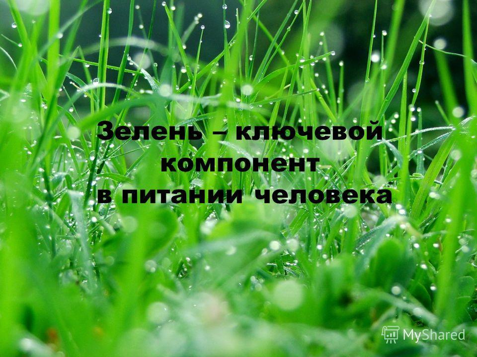 Зелень – ключевой компонент в питании человека