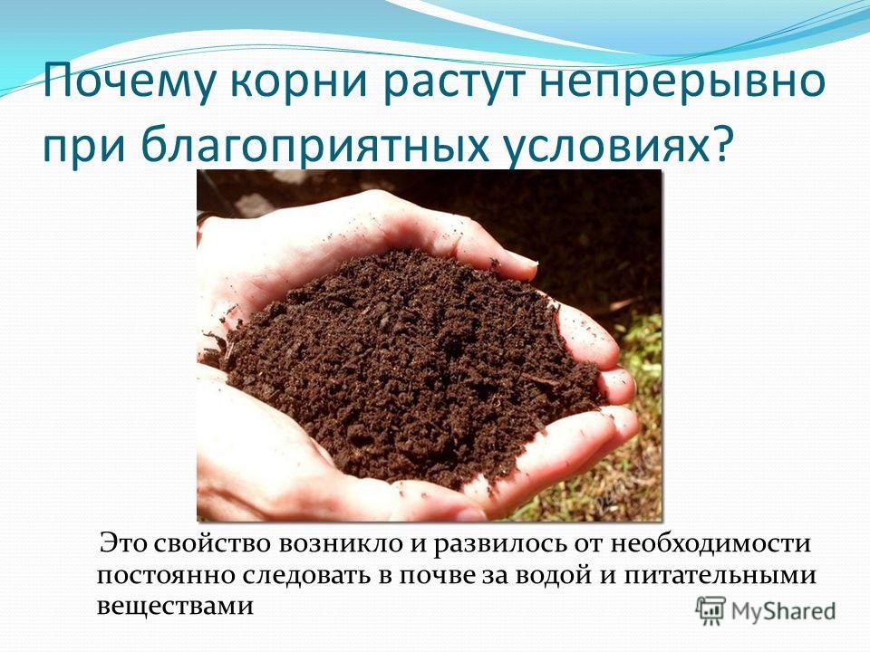 Почему корни растут непрерывно при благоприятных условиях? Это свойство возникло и развилось от необходимости постоянно следовать в почве за водой и питательными веществами