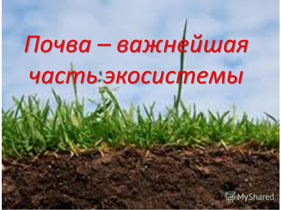 Почва – важнейшая часть экосистемы