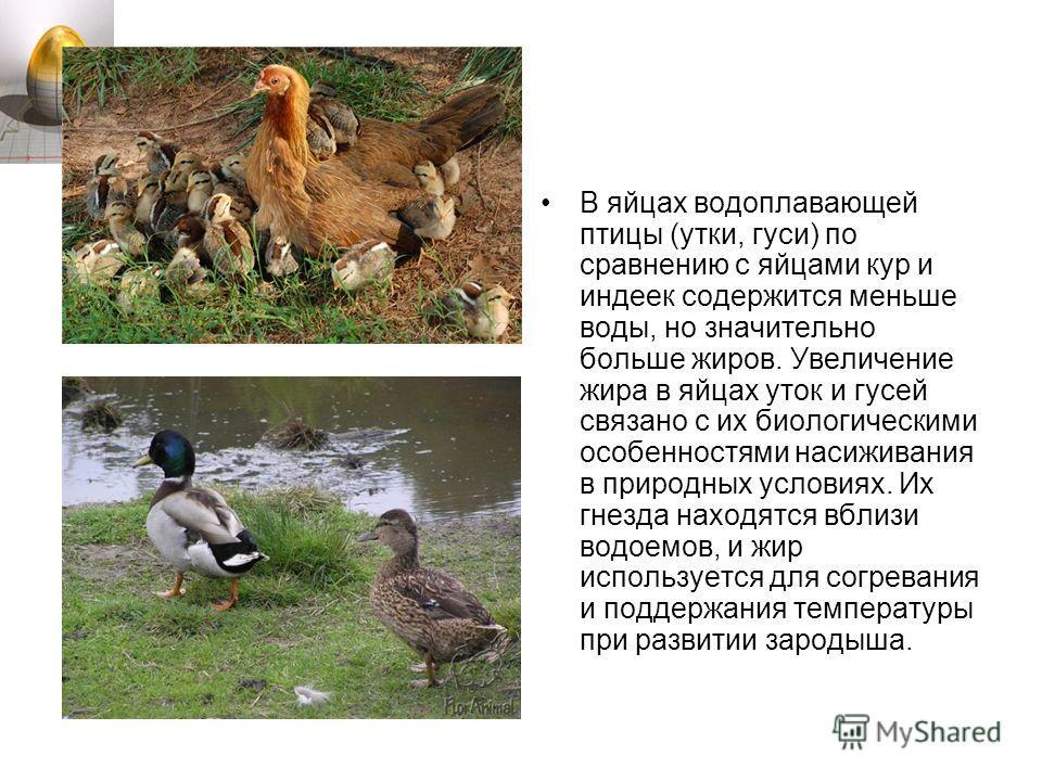 В яйцах водоплавающей птицы (утки, гуси) по сравнению с яйцами кур и индеек содержится меньше воды, но значительно больше жиров. Увеличение жира в яйцах уток и гусей связано с их биологическими особенностями насиживания в природных условиях. Их гнезд