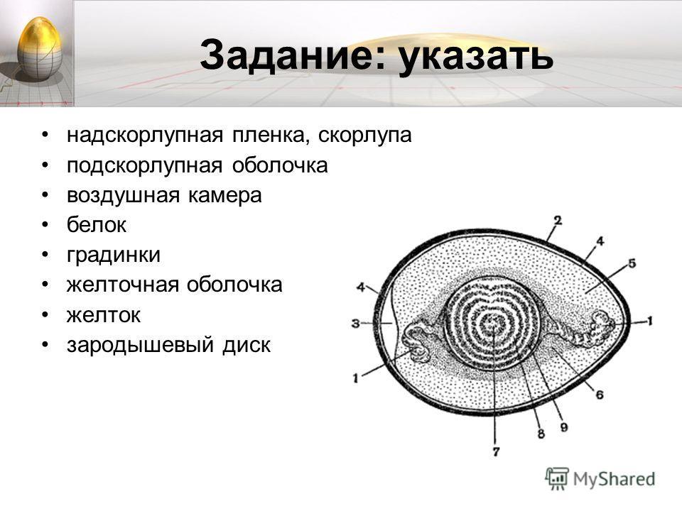 Задание: указать надскорлупная пленка, скорлупа подскорлупная оболочка воздушная камера белок градинки желточная оболочка желток зародышевый диск