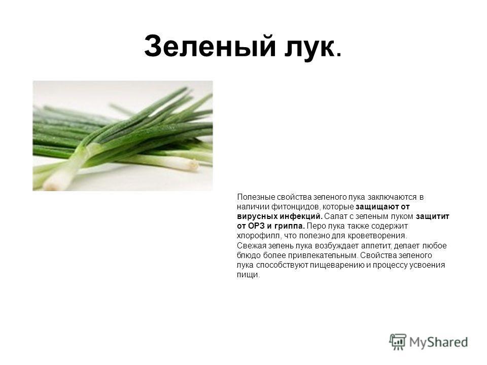 Зеленый лук. как кажется с виду. Полезные свойства зеленого лука заключаются в наличии фитонцидов, которые защищают от вирусных инфекций. Салат с зеленым луком защитит от ОРЗ и гриппа. Перо лука также содержит хлорофилл, что полезно для кроветворения