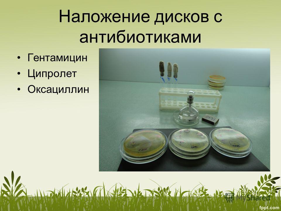 Наложение дисков с антибиотиками Гентамицин Ципролет Оксациллин