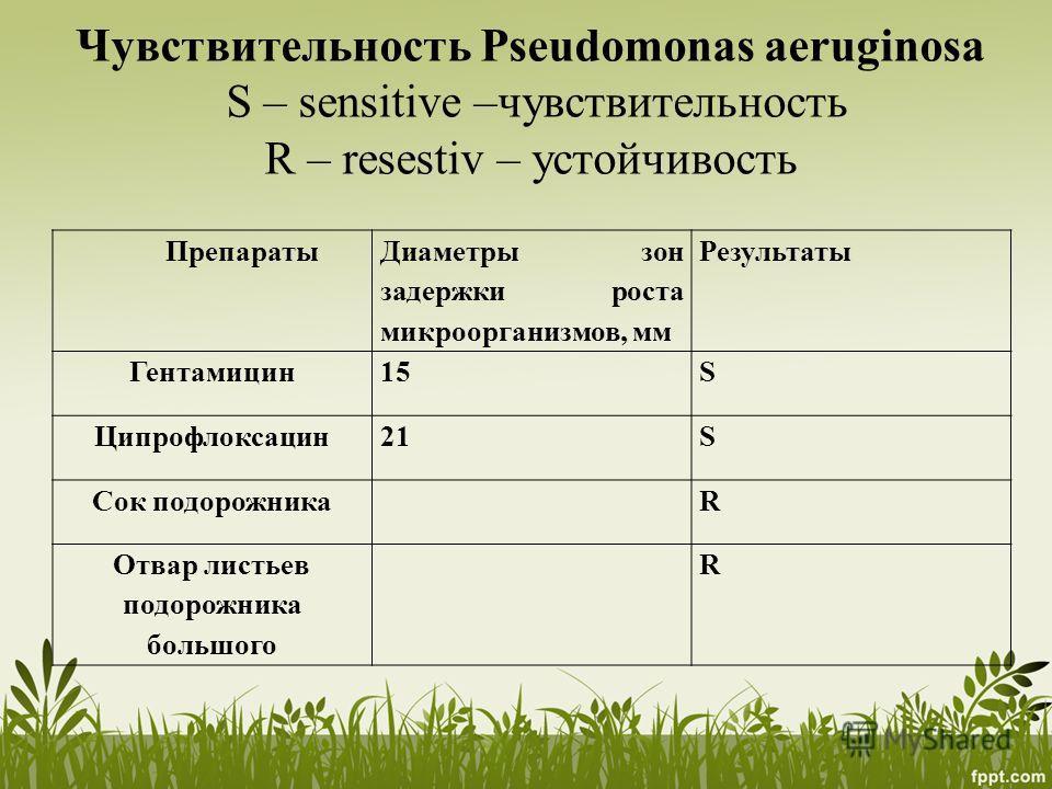 Чувствительность Pseudomonas aeruginosa S – sensitive –чувствительность R – resestiv – устойчивость Препараты Диаметры зон задержки роста микроорганизмов, мм Результаты Гентамицин 15S Ципрофлоксацин 21S Сок подорожникаR Отвар листьевв подорожника бол