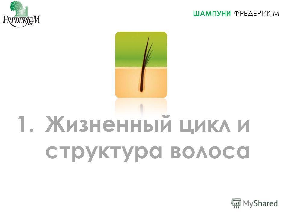 ШАМПУНИ ФРЕДЕРИК M 1. Жизненный цикл и структура волоса