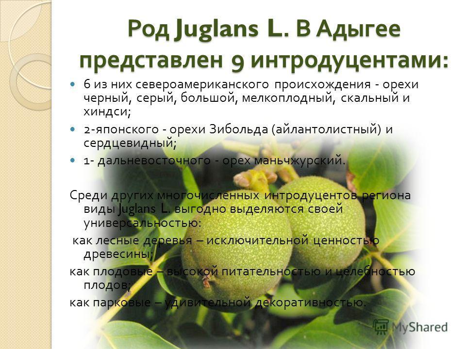 Род Juglans L. В Адыгее представлен 9 интродуцентами : 6 из них североамериканского происхождения - орехи черный, серый, большой, мелкоплодный, скальный и хиндси ; 2- японского - орехи Зибольда ( айлантолистный ) и сердцевидный ; 1- дальневосточного