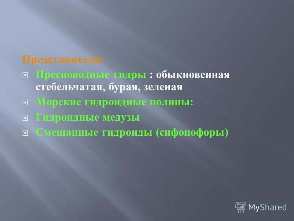 Представители : Пресноводные гидры : обыкновенная стебельчатая, бурая, зеленая Морские гидроидные полипы : Гидроидные медузы Смешанные гидроиды ( сифонофоры )