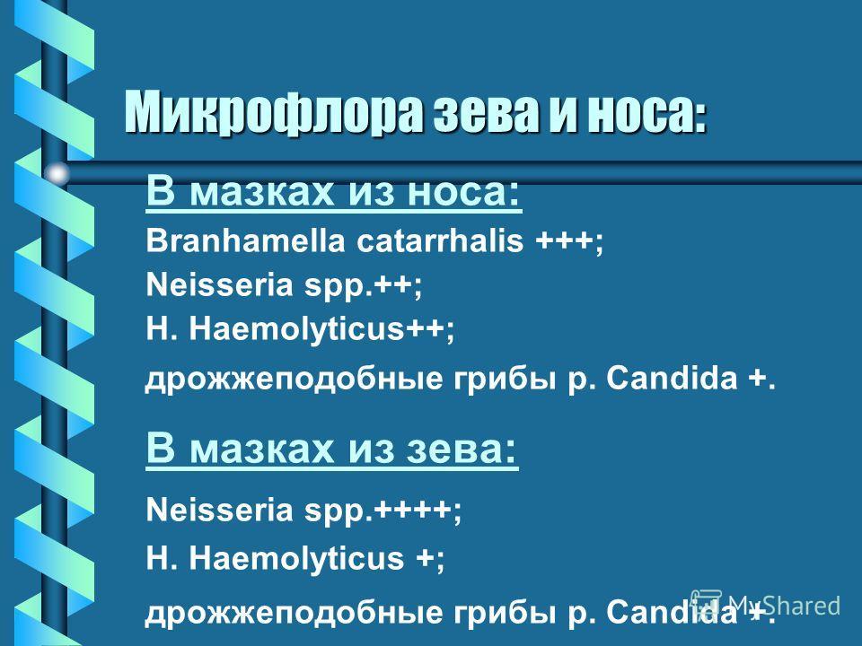 В мазках из носа: Branhamella catarrhalis +++; Neisseria spp.++; H. Haemolyticus++; дрожжеподобные грибы р. Candida +. В мазках из зева: Neisseria spp.++++; H. Haemolyticus +; дрожжеподобные грибы р. Candida +. Микрофлора зева и носа: