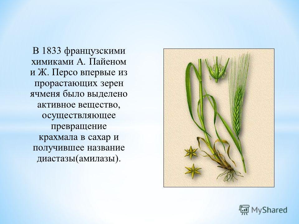 В 1833 французскими химиками А. Пайеном и Ж. Персо впервые из прорастающих зерен ячменя было выделено активное вещество, осуществляющее превращение крахмала в сахар и получившее название диастазы(амилазы).